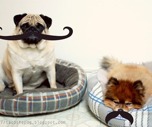 dog and mustache image