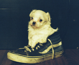 cute, dog, and shoes image