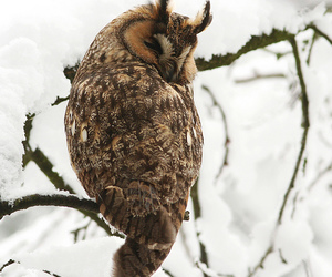 animal, feather, and owl image