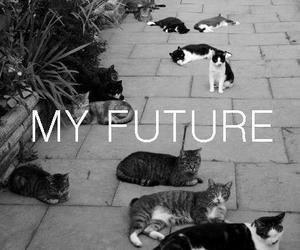 cat, future, and black and white image