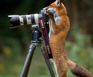 fox, animal, and camera image