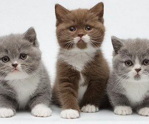 kitten, cats, and cute animals image