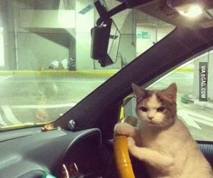 car, hurry, and cat image