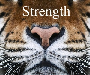 kitty, strength, and rawr image