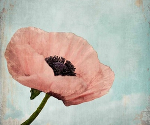 flower and poppy image