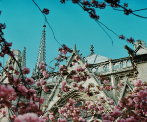 architecture, cathedral, and cherry blossom image