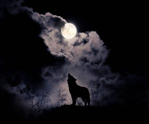 wolf, moon, and dark image