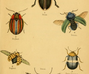 colors, illustration, and insects image