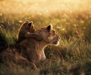 cub, nature, and love image