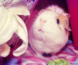<3, adorable, and animal image