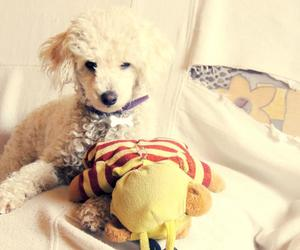 bee, best friend, and cute dog image