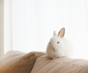 baby, bunny, and Dream image