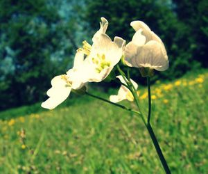 day, flower, and life image