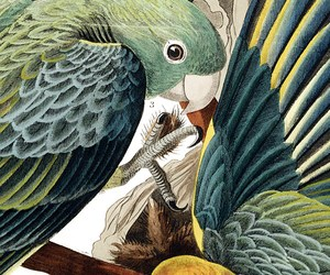 bird, illustration, and parrot image