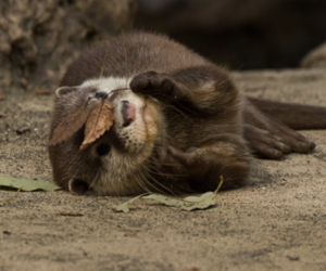 otter, cute animals, and animal image