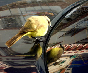 bird, car, and mirror image