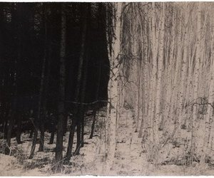 art, tree, and forest image