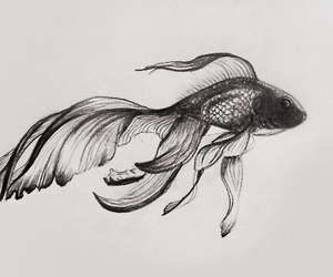 fish, cool, and indie image