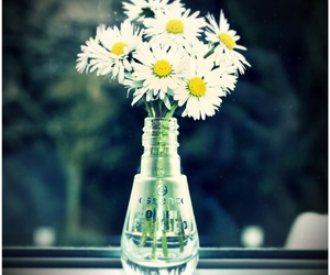 essence, flowers, and daisies image