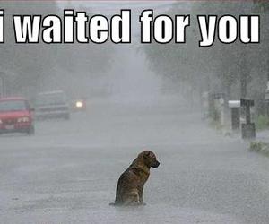 sad and dog image
