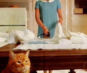60s, blonde, and cat image