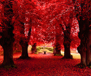 red, autumn, and tree image