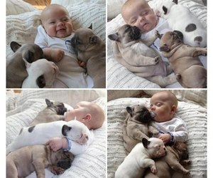 baby, friendship, and puppies image