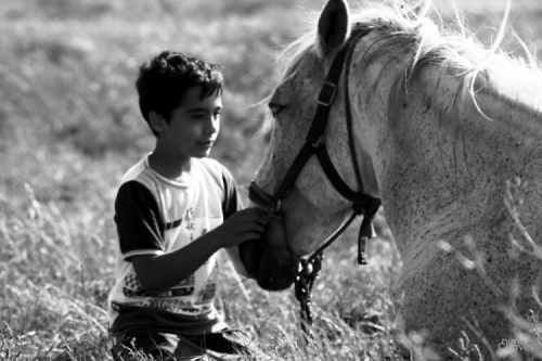 animal, black and white, and boy image