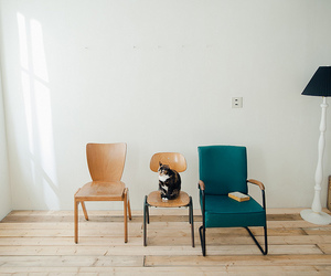 cat and chair image
