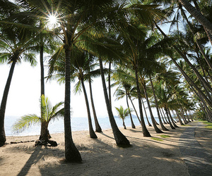 palm trees, beach, and sea image