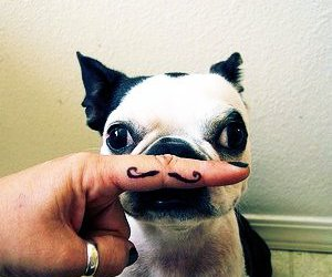 dog, cute, and mustache image