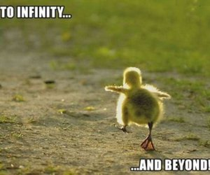 cute, duck, and funny image