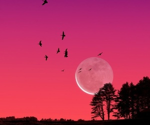 moon, pink, and nature image