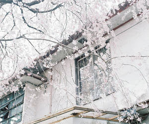 pink, tree, and building image