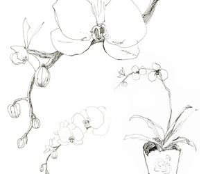 flowers, illustration, and orchid image