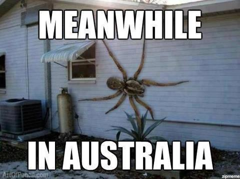 aussie, house, and proud image