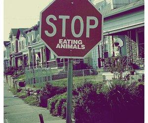 animal, vegetarian, and stop image