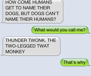 dog, message, and text from dog image
