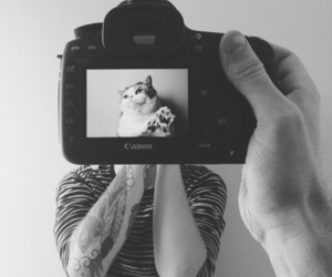 cat, photography, and tattoo image