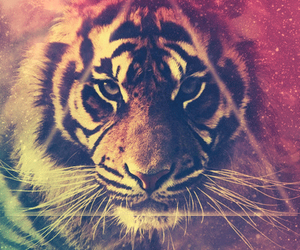 amazing, colors, and kitty image