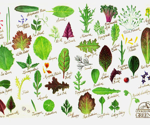 illustration, plants, and salad image