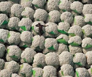 cotton, nap, and Yann Arthus-Bertrand image