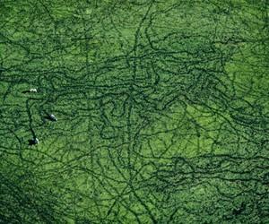 Yann Arthus-Bertrand, green, and ways image