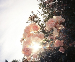 *, cool, and flower image
