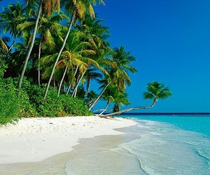 beach, paradise, and blue image