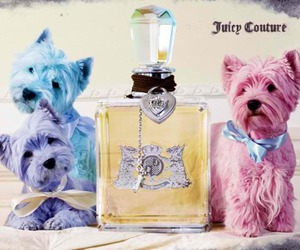 juicy couture, dog, and perfume image