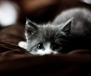 blue eyes, kitty, and bkw image