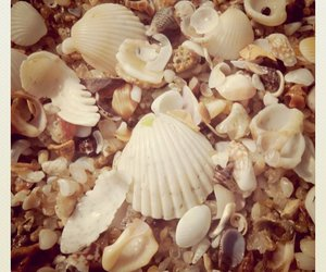 africa, beach, and shells image