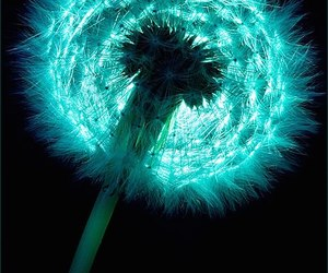 photography, blue, and dandelion image