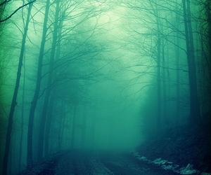 forest, green, and fog image